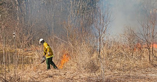 Firefighter conducting a controlled burn of a meadow