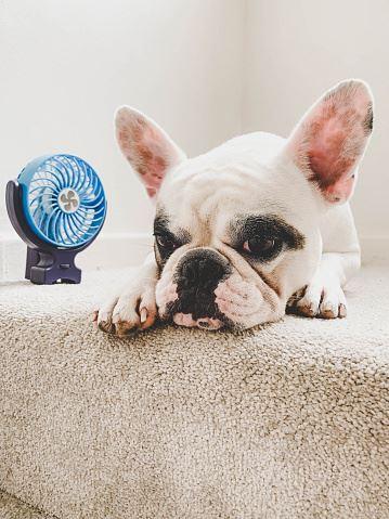 Dog next to fan